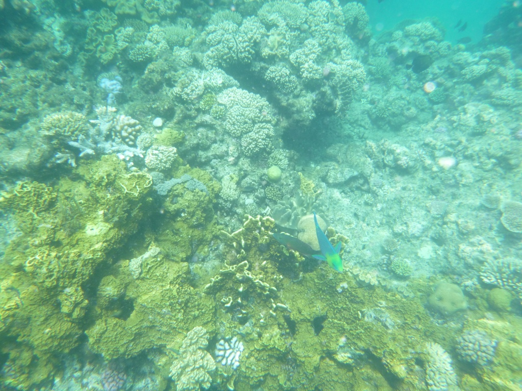 Because my camera sucks, this picture does not do justice to just how colorful and full of life the reef was!