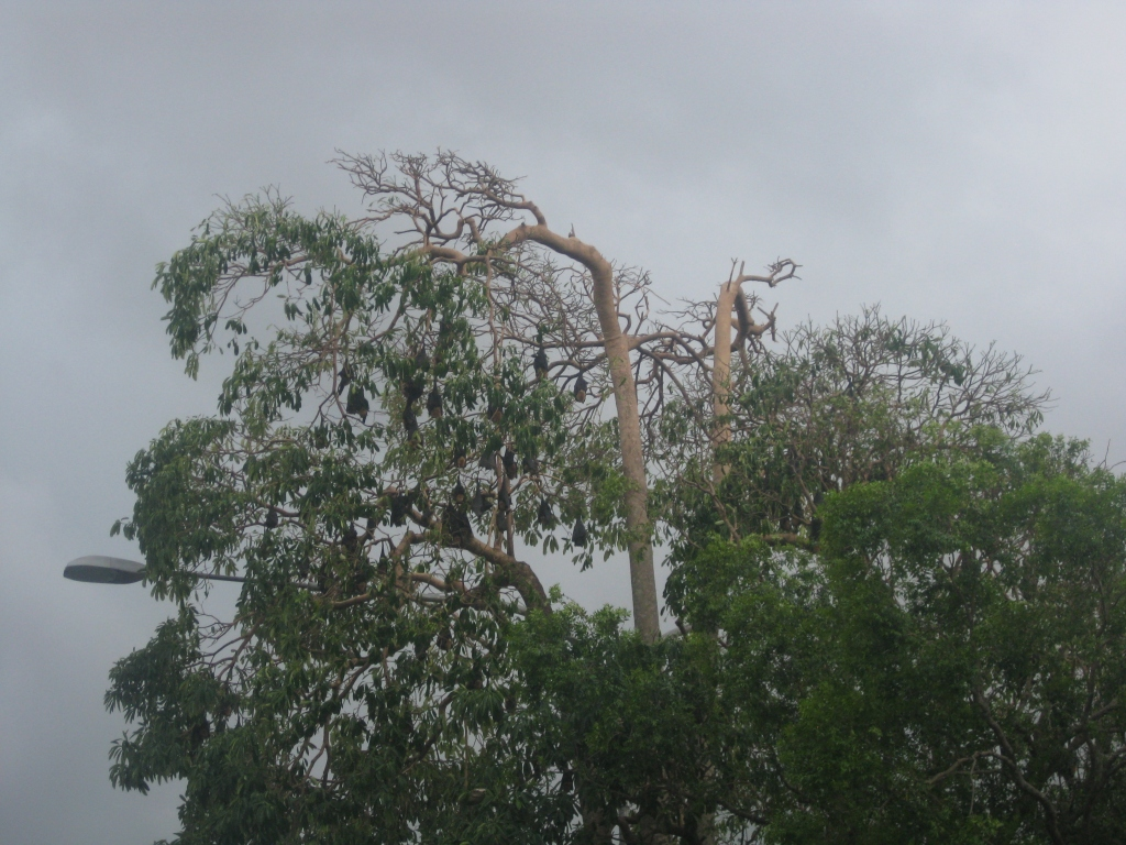 Bats hanging around