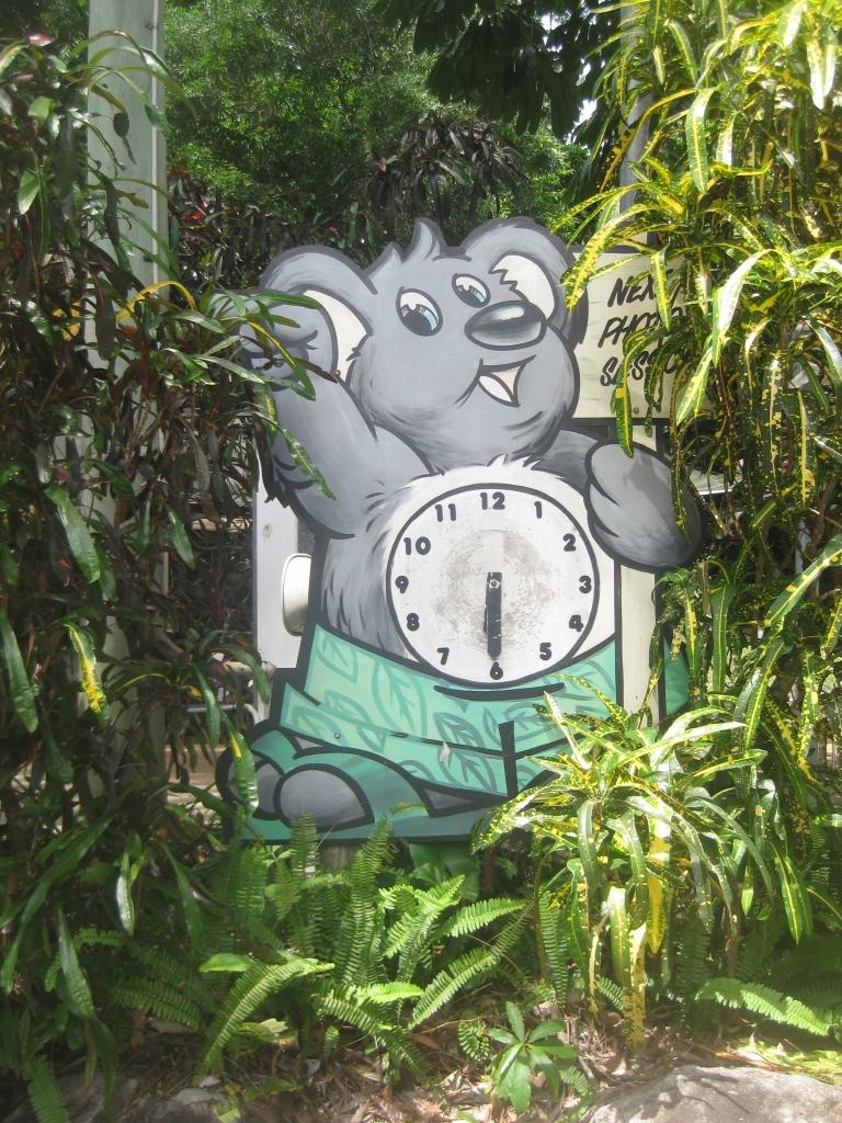 It's koala time!