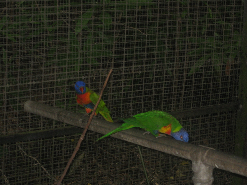 Cairns Tropical Zoo (112)