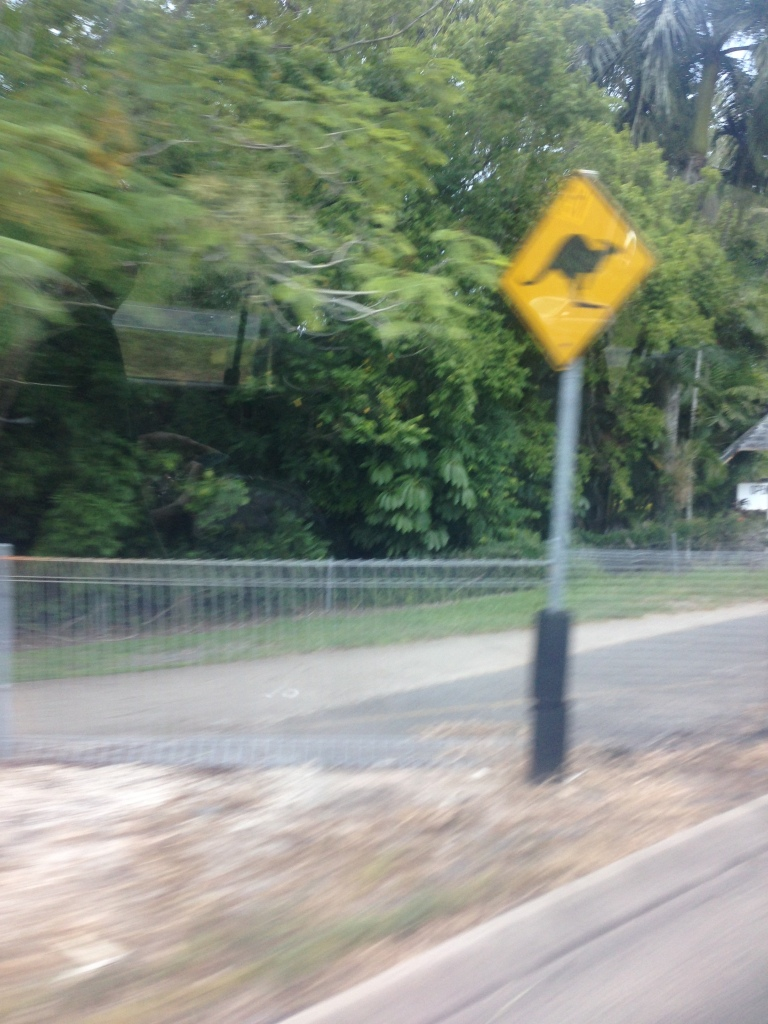 Terrible shot but yes, kangaroo crossing signs do exist!