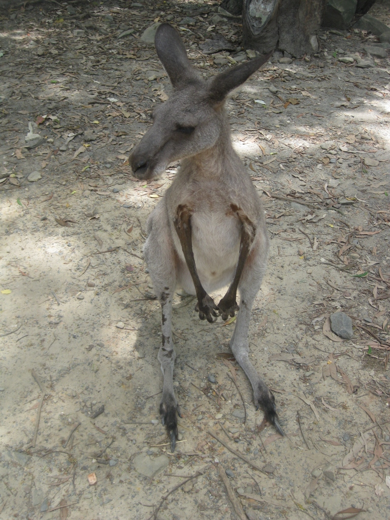 You can feed the kangaroos - you can buy $2 feed at the entrance but they don't really eat it. It's still a good chance to get up close to a kangaroo.