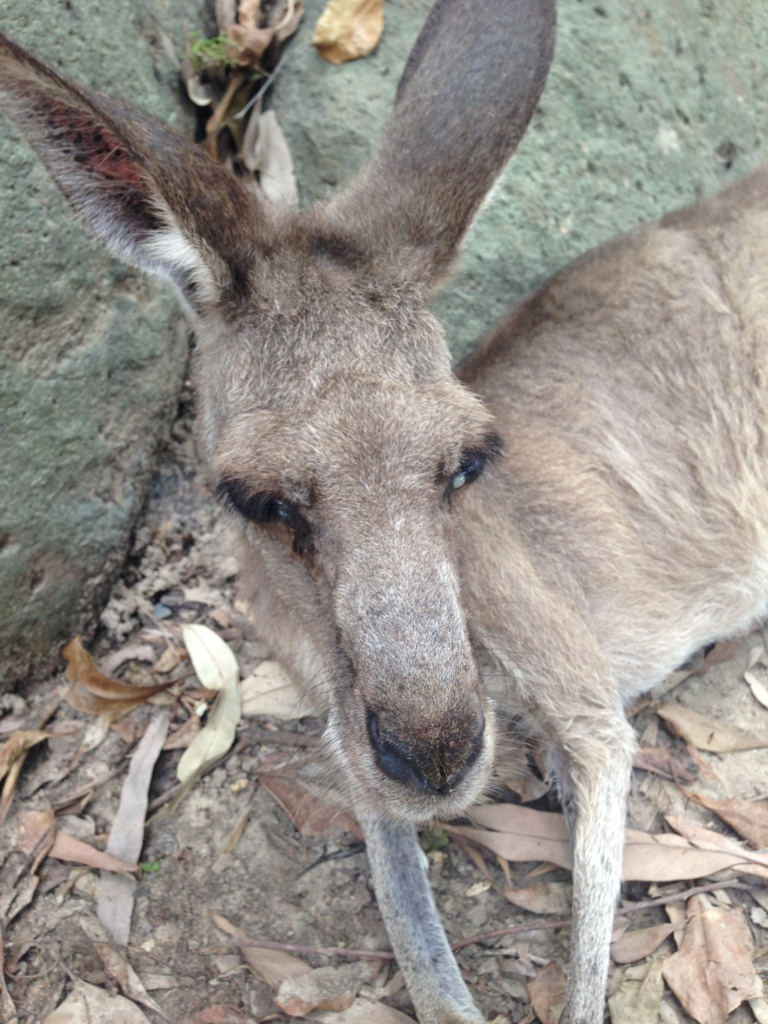 Cairns Tropical Zoo (98)