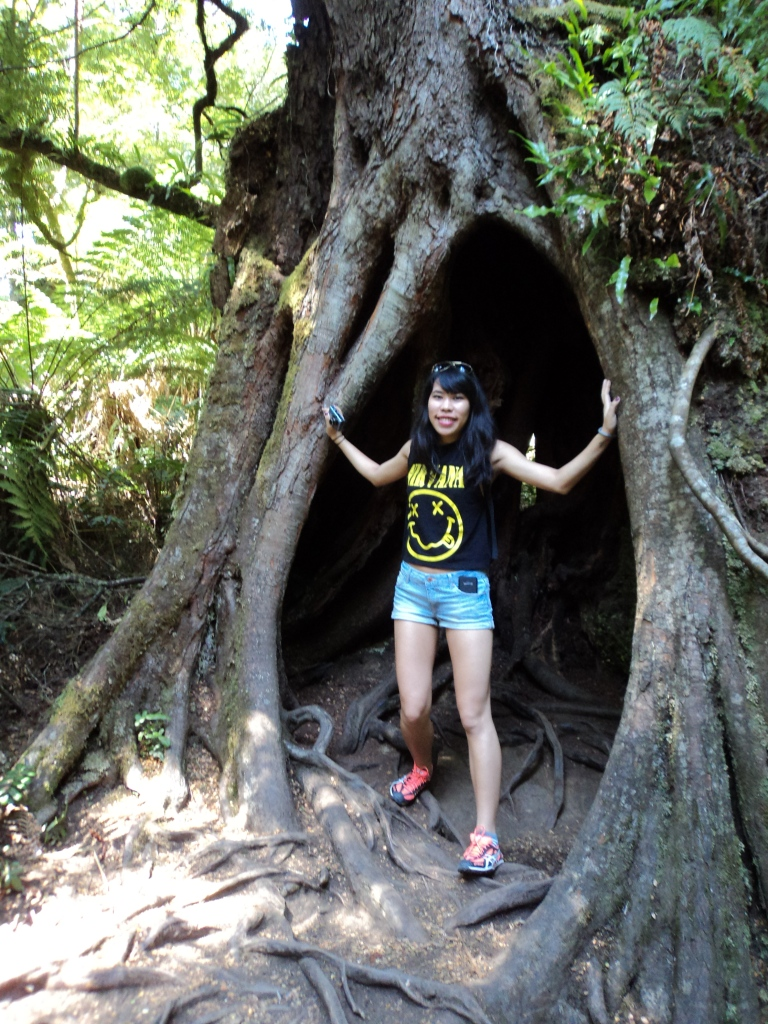 Just to give you an idea of how big these trees really are (Photo Credit to Mabel)