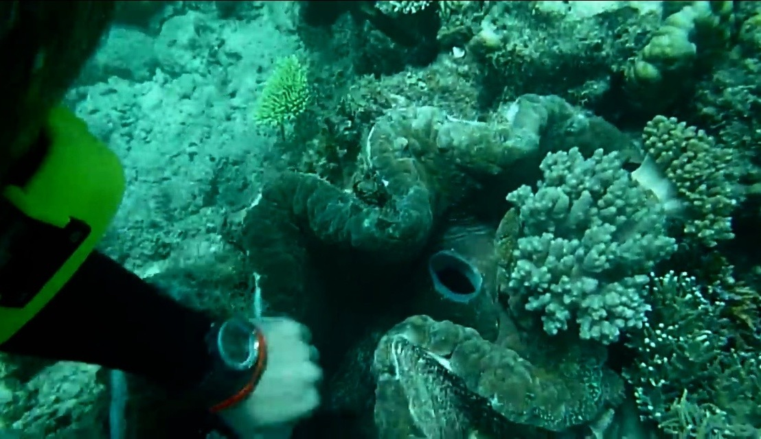 scuba diving in the great barrierreef