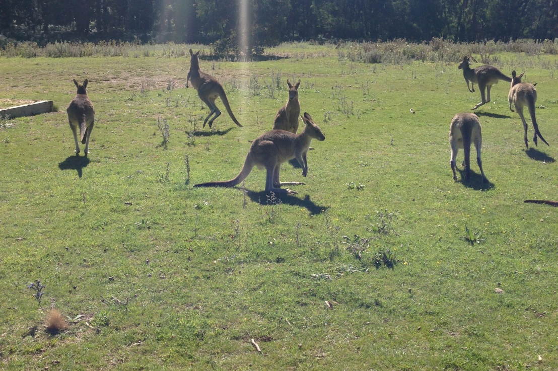 """do you know what the word, """"kangaroo"""" means? i don'tknow…"""