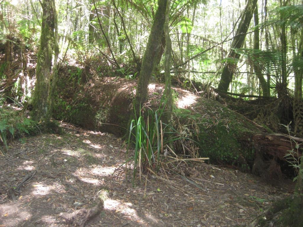 Otway Rainforest (7)
