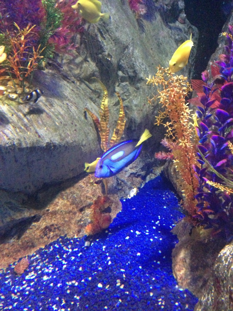 Found Dory, but where's Marlin?