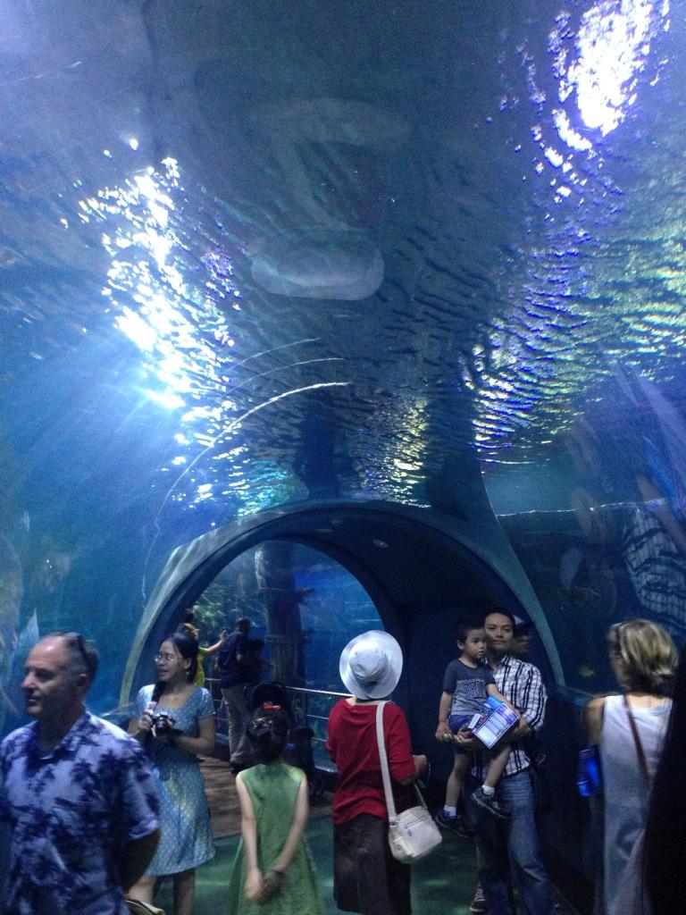 Sea Life Melbourne (39)