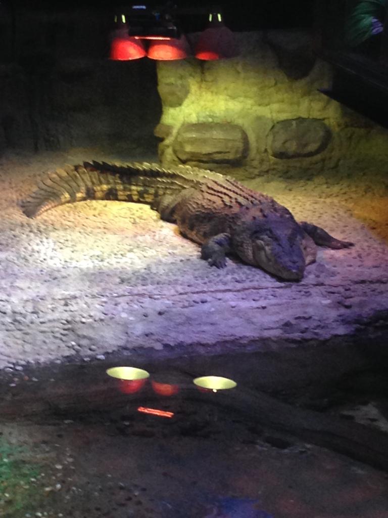 A random croc