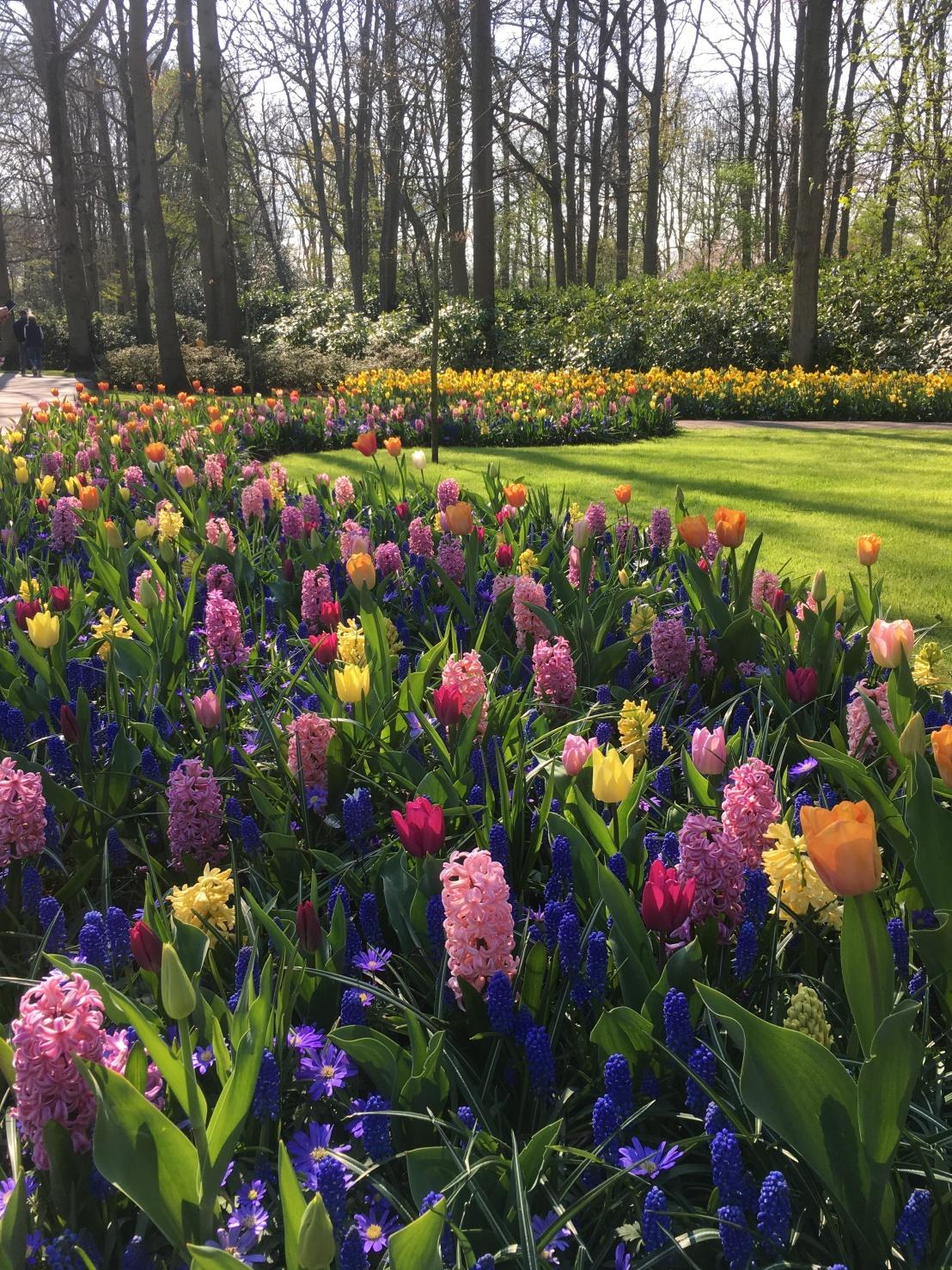 Keukenhof Gardens 319
