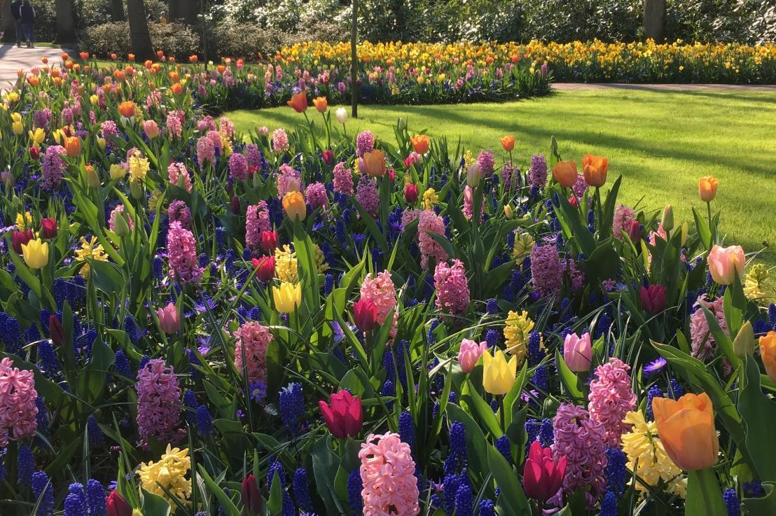 7 million tulips