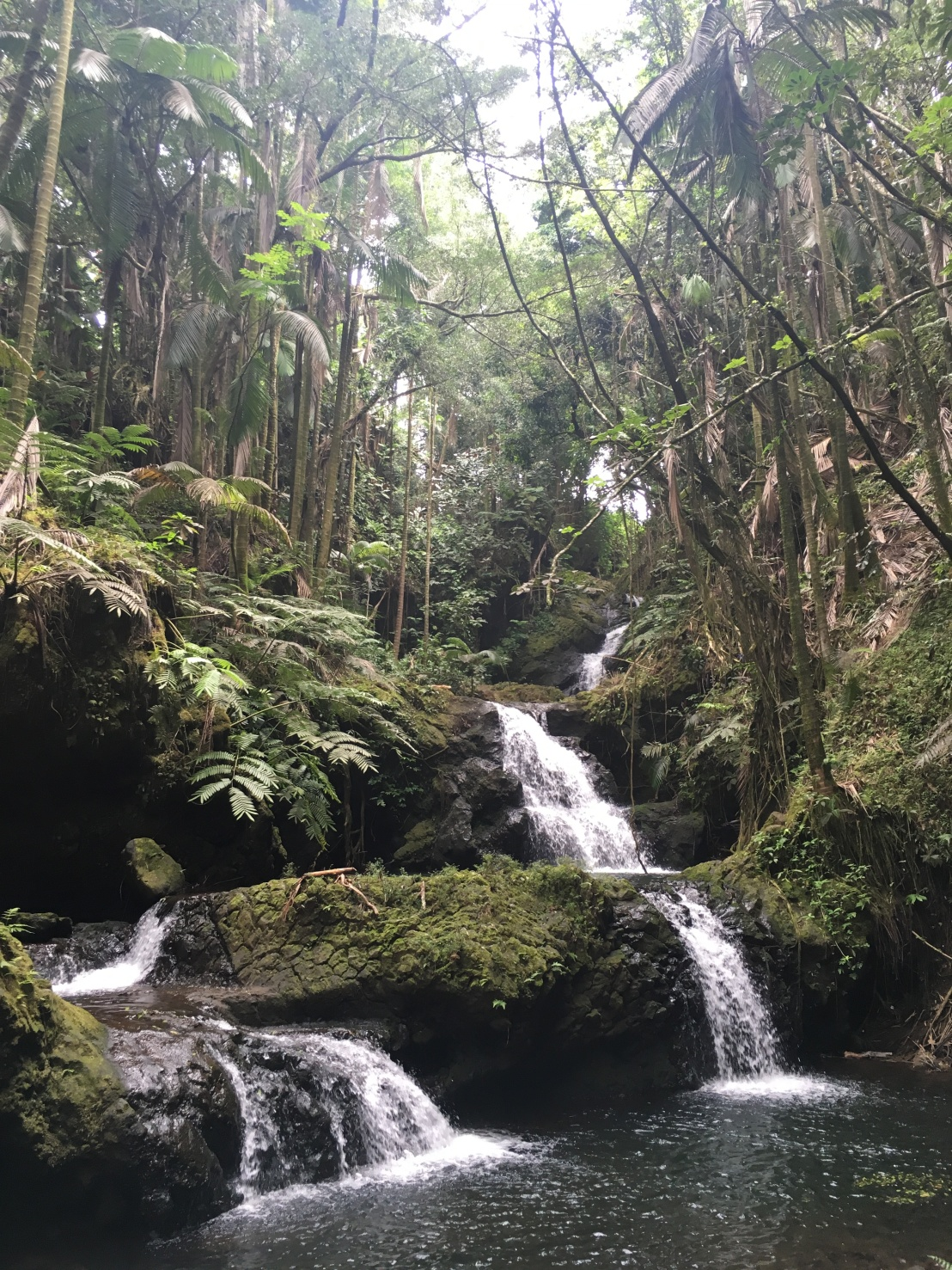 hawaii-tropical-botanical-gardens-15
