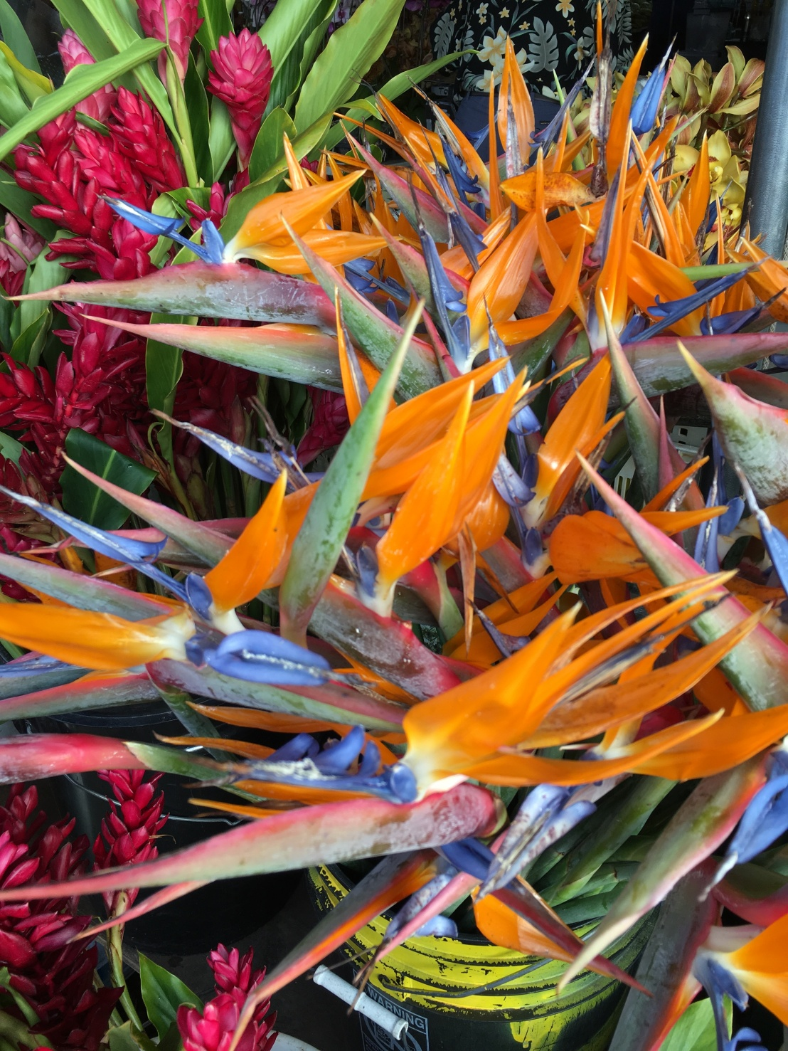 hilo-farmers-market-11