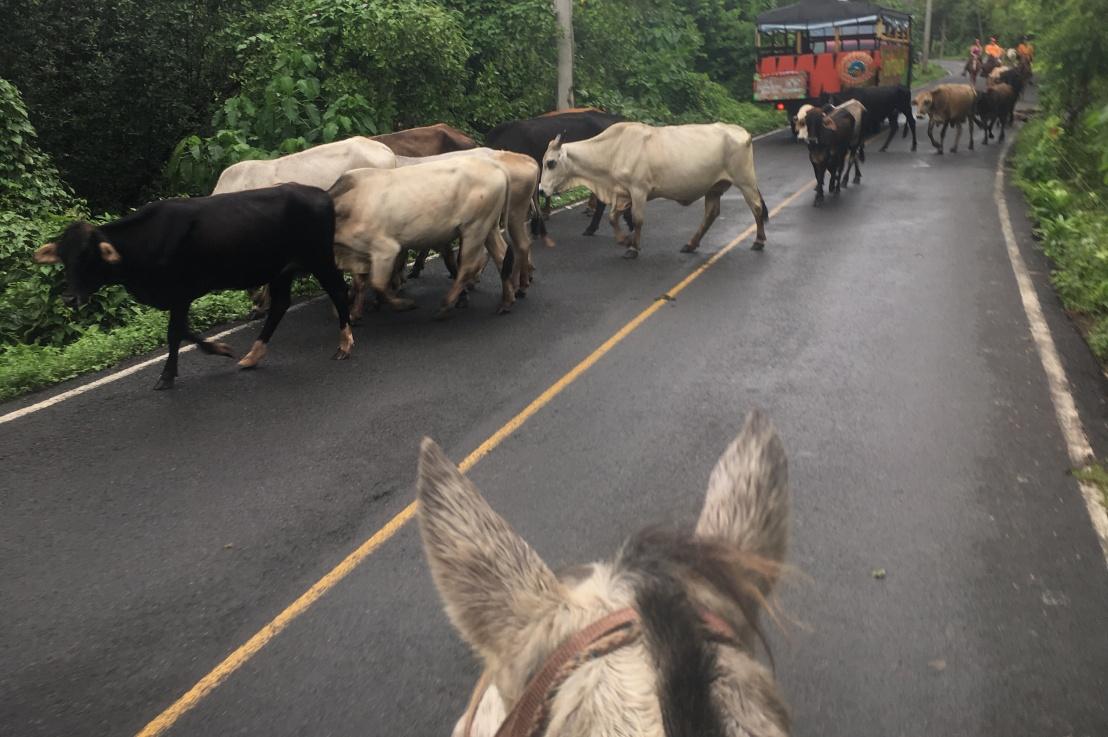 horseback riding in thecaribbean