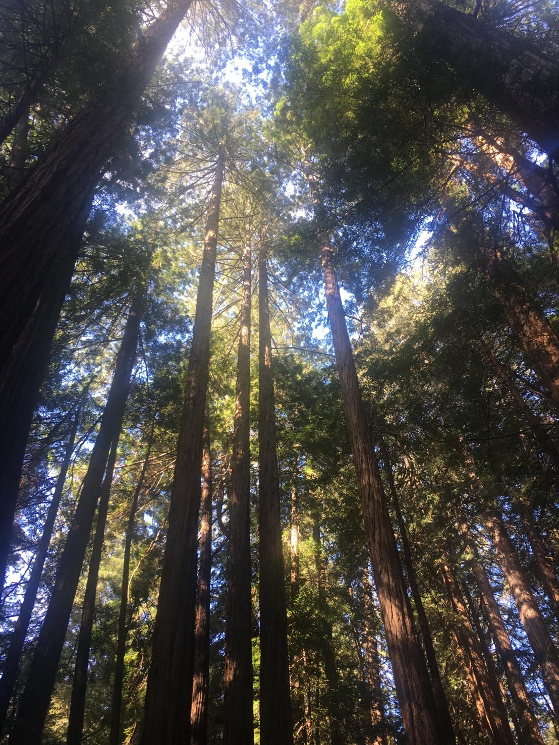 Muir Woods 18