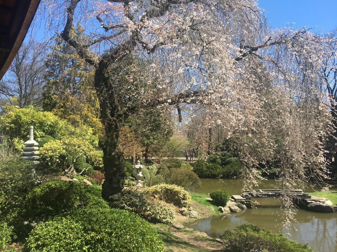 Shofuso Gardens 3