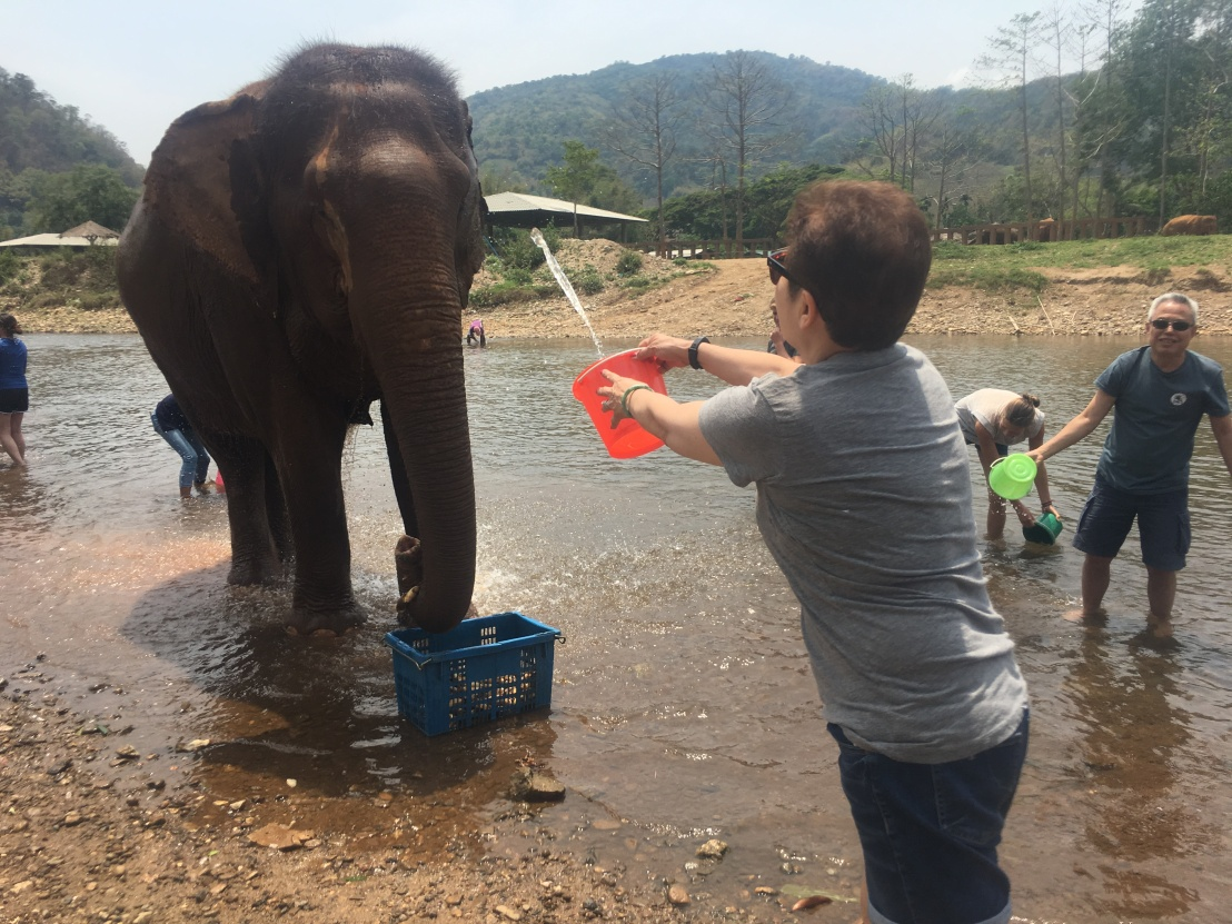 Elephant Nature Reserve 104