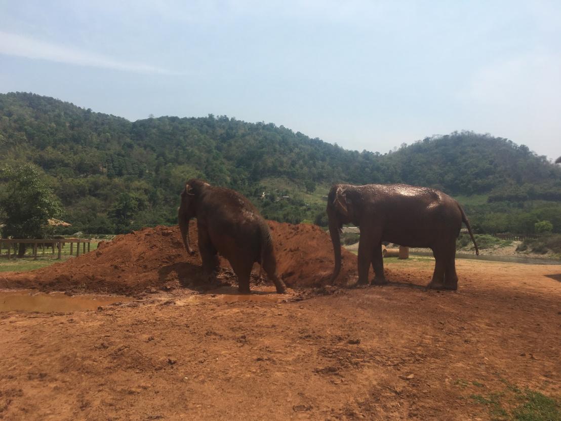 Elephant Nature Reserve 115