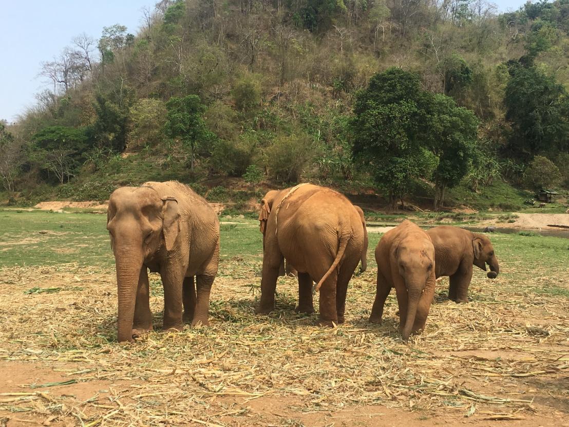 Elephant Nature Reserve 129