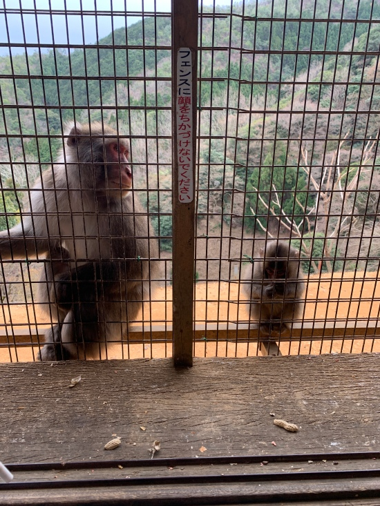 NOT Mama and baby. The baby tried to take the bigger monkey's food and he/she was not having it