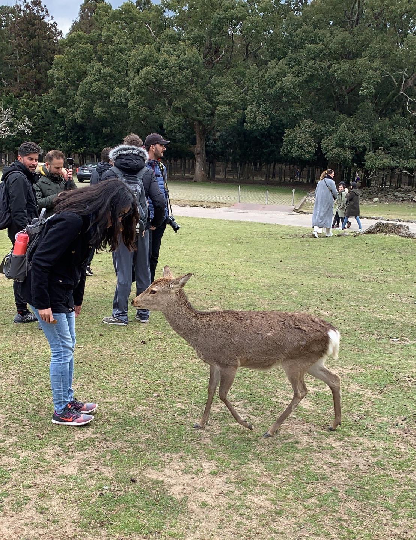 Nara Park 46