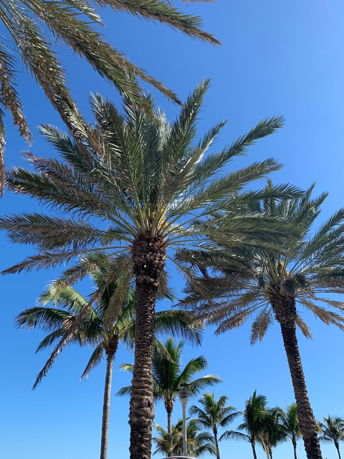 Miami Beach 70
